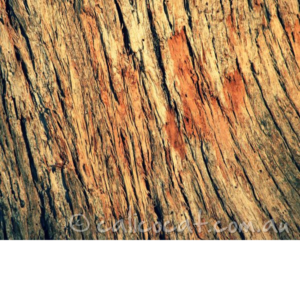 Photograph of tree bark