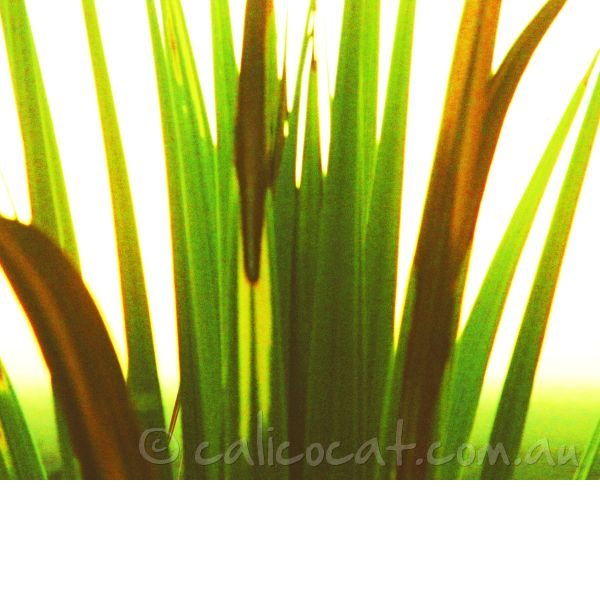 Adjusted photo of reeds