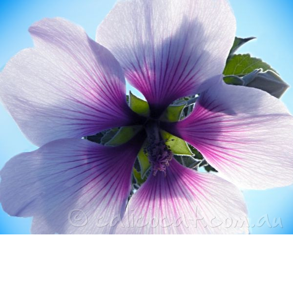 Photo of a purple flower against the sky